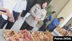 Kompol Lily Djafar menunjukkan barang bukti 1.000 ketapel yang dipesan seorang di Maros, Sulawesi Selatan. Polisi mengamankan ribuan ketapel untuk mengantisipasi penyalahgunaan untuk kejahatan atau senjata massa yang melakukan kerusuhan (Foto: VOA/Petrus)