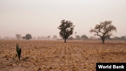 FILE - Mali landscape (Courtesy: World Bank)