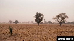 Rockefeller Foundation projects in Africa are working to help farmers cope with the effects of climate change. (Photo courtesy World Bank)