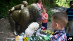 A boy brings flowers to put beside a statue of a gorilla outside the shuttered Gorilla World exhibit at the Cincinnati Zoo & Botanical Garden, May 30, 2016, in Cincinnati.