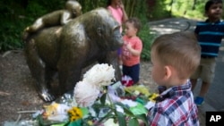 A boy brings flowers to put beside a statue of a gorilla outside the shuttered Gorilla World exhibit at the Cincinnati Zoo & Botanical Garden, May 30, 2016, in Cincinnati. A gorilla named Harambe was killed by a special zoo response team on Saturday after a 4-year-old boy slipped into an exhibit and it was concluded his life was in danger. (AP Photo/John Minchillo)