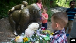 FILE - A boy brings flowers to put beside a statue of a gorilla outside the shuttered Gorilla World exhibit at the Cincinnati Zoo & Botanical Garden, May 30, 2016, in Cincinnati.