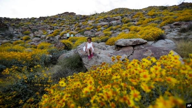 Se espera que la floración continúe hasta mayo y diferentes especies sigan brotando a diferentes alturas y en distintas zonas del parque.