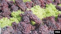 حدود ۵۰ نوع انگور در هرات پرورش داده می شود