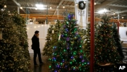 In this Friday, Nov. 30, 2018, photo, a man looks at artificial Christmas trees for sale at the Balsam Hill Outlet store in Burlingame, Calif. (AP Photo/Eric Risberg)