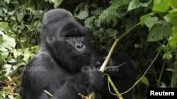 Baadhi ya wanyama wanaopatikana mbuga ya Virunga