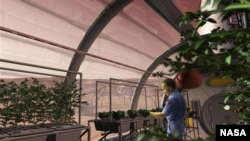 Mars_Greenhouse_ (Long-term setttlements on Mars could potentially grow their own food) NASA