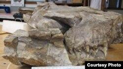 آرشیف: تصویر قسمت راست جمجمۀ یک حیوان که ناحیه چشم و دندان های آنرا نشان میدهد
