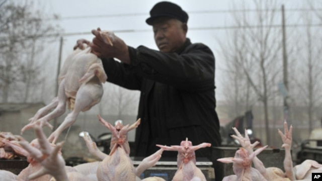A Chinese vendor sells slaughtered chickens at an open air market in Shandong province on Feb. 9, 2010.