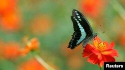 Khu triển lãm có các con bướm từ châu Á, từ châu Phi, Nam Mỹ và Trung Mỹ, và ngay tại Mỹ.