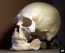 FILE - A plastic casting of the skull of the Kennewick Man is shown in Richland, Wash., July 24, 1997.