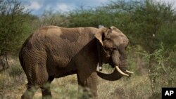 Zimbabwe elephants will soon find new homes as southern African country tries to de-stock.