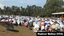 Faayilii - Ayyaana Eid Al Fatr, Amboo