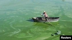 A worker rows a boat in Chaohu Lake, filled with blue-green algae, in Hefei, Anhui province, China, July 23, 2012.