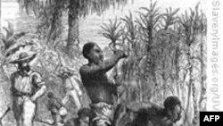 Tìm hiểu về tổ tiên của người Mỹ gốc nô lệ châu Phi