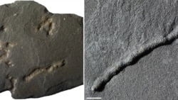 Quiz - Earth's Earliest Mobile Organism Lived 2.1 Billion Years Ago