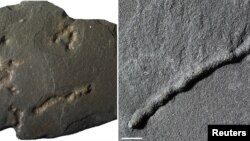 Tube-like structures found in black shale from a quarry in Gabon dating from 2.1 billion years ago. (Abderrazak Albani/IC2MP/CNRS/Universite de Poitiers/Handout via REUTERS)