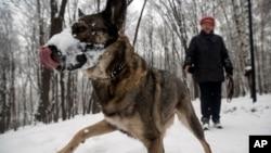 بیماری سگ دیوانه حیوانات پستاندار را مصاب می سازد