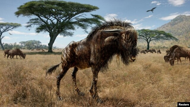 An artist's interpretation of Rusingoryx atopocranion on the Late Pleistocene plains of what is now Rusinga Island is seen in an undated illustration. (Courtesy of Todd S. Marshall)