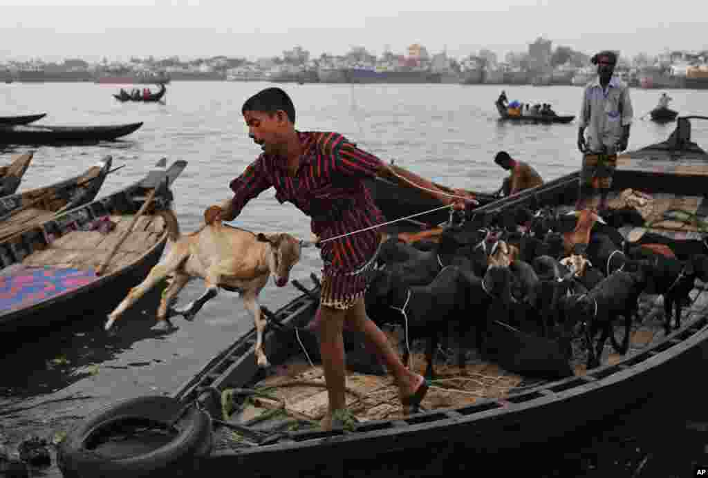 A Bangladeshi boy tosses a goat off of a boat on the Buriganga River in Dhaka.