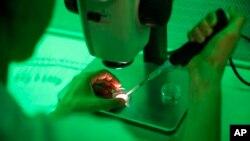 Investigadores españoles que esperan haber encontrado una pista para nuevos medicamentos contra el virus de la inmunodeficiencia humana (VIH por sus siglas en español).