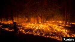 Kebakaran hutan di kawasan Fresh Pond, California, AS (17/9). Suhu udara mencatat rekor terpanas sepanjang Juni-Agustus menyebabkan bencana kebakaran hutan di berbagai negara.