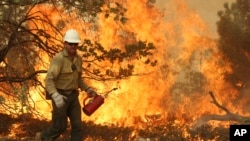 This August 30, 2013, image provided by the U.S. Forest Service, shows a member of the BLM Silver State Hotshot crew using a drip torch to set back fires on the southern flank of the Rim Fire in California.