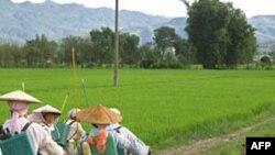Việt Nam chuyển giao kỹ thuật trồng lúa cho Cuba
