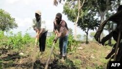 Nông dân Haiti xới đất để gieo trồng vụ xuân
