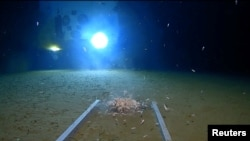 Sea creatures swim around a part of a submersible lander, illuminated by the light of the submarine DSV Limiting Factor, on the floor of the Pacific Ocean's Mariana Trench in an undated still image from video released by the Discovery Channel, May 13, 2019.