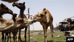 NATO Libya İçin Kararlı