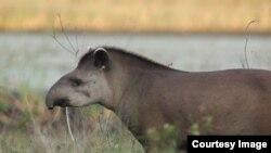 Animals on the Brink of Extinction