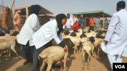 Sayladda Xoolaha ee Hargeisa