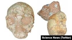 فسیل بخشی از جمجمه انسان ماقبل تاریخ که به ۲۱۰ هزار سال پیش باز می گردد