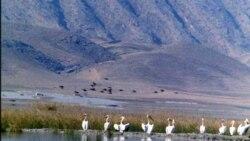 تالاب پریشان پیش از جاده سازی زیستگاه گونه های کمیاب حیات وحش ایران بود