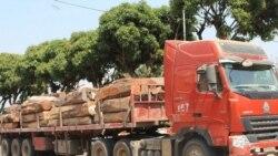 madeira apreendida no Namibe - 2:11