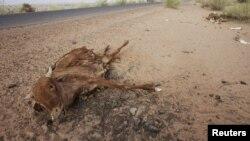 La gestion de la sècheresse doit commencer avant qu'elle ne frappe, estime la FAO