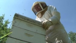 Raising Crops Linked to Declining Bee Population Worldwide