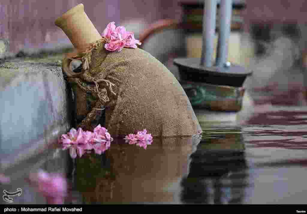 فصل گلاب گیری در کاشان عکس: محمد رفیعی موحد