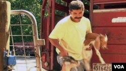 Pegawai peternakan Wagon Wheel ini membawa kambing yang akan disembelih.