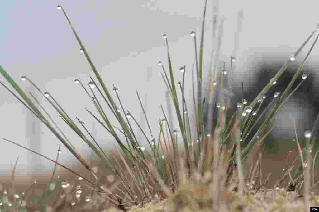 Ночью в полупустыне не холодно, а на рассвете скудная травяная растительность покрывается капельками россы
