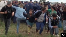 In this image taken from TV, a Hungarian camerawoman identified as Petra Laszlo, center left in blue, kicks out at a young migrant who had just crossed the border from Serbia near Roszke, Hungary, Sept. 8, 2015.