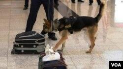 სპეციალურად გაწვრთნილი ძაღლი თბილისის საერთაშორისო აეროპორტში