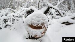 Cây cối bị gãy vì bão Sandy bị bao phủ trong tuyết ở Manhasset, New York, ngày 8/11/2012.