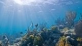 Underwater diversity at Biscayne National Park