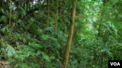 Hutan Indonesia. Selain menangani perubahan iklim Indonesia, pemerintah juga diminta mendesak negara maju mengurangi emisi gas rumah kaca.