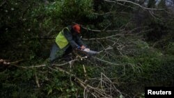 A worker clears fallen trees off a road with a chainsaw during Storm Ophelia in the County Clare area of the Burren, Ireland, Oct. 16, 2017.