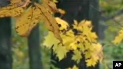 麻萨诸塞州Wachusett秋叶景色