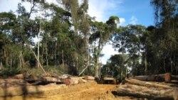 Le trafic du bois fait perdre 200 milliards de FCFA par an au Gabon