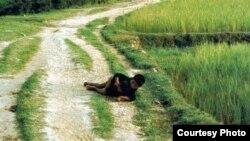 Bức ảnh 'Hai đứa trẻ Mỹ Lai' mà ông Trần Văn Đức cho là chụp hai anh em ông. Ảnh: Ronald Haeberle.